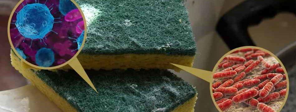 Названы 5 самых грязных мест в доме, где бактерий просто не сосчитать