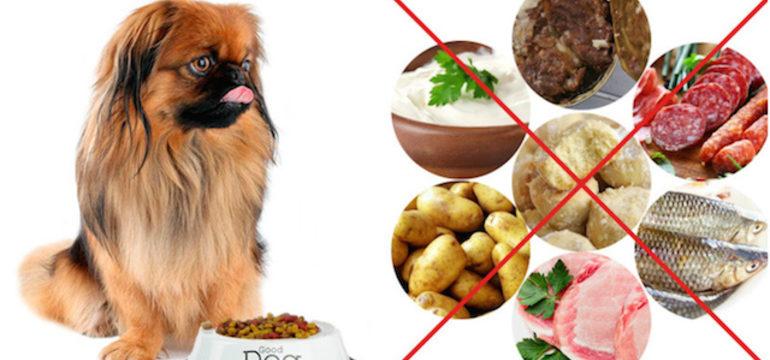 Какие продукты нельзя давать собакам