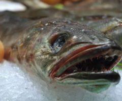 Виды рыб, которые продают без головы — и не зря!