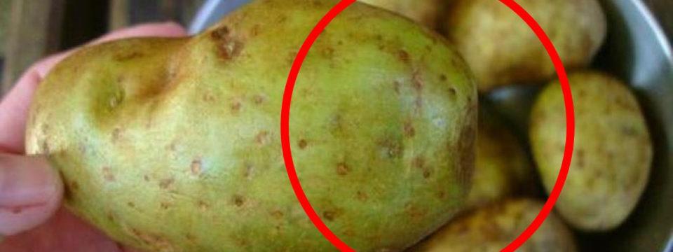 Почему очень опасно есть картошку с позеленевшей кожурой