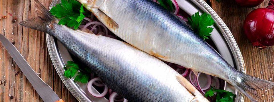 Правила хранения соленой рыбы в рассоле и в сухом виде в холодильнике или морозилке