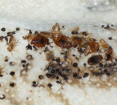 Какие насекомые могут завестись в квартире: методы борьбы с ними