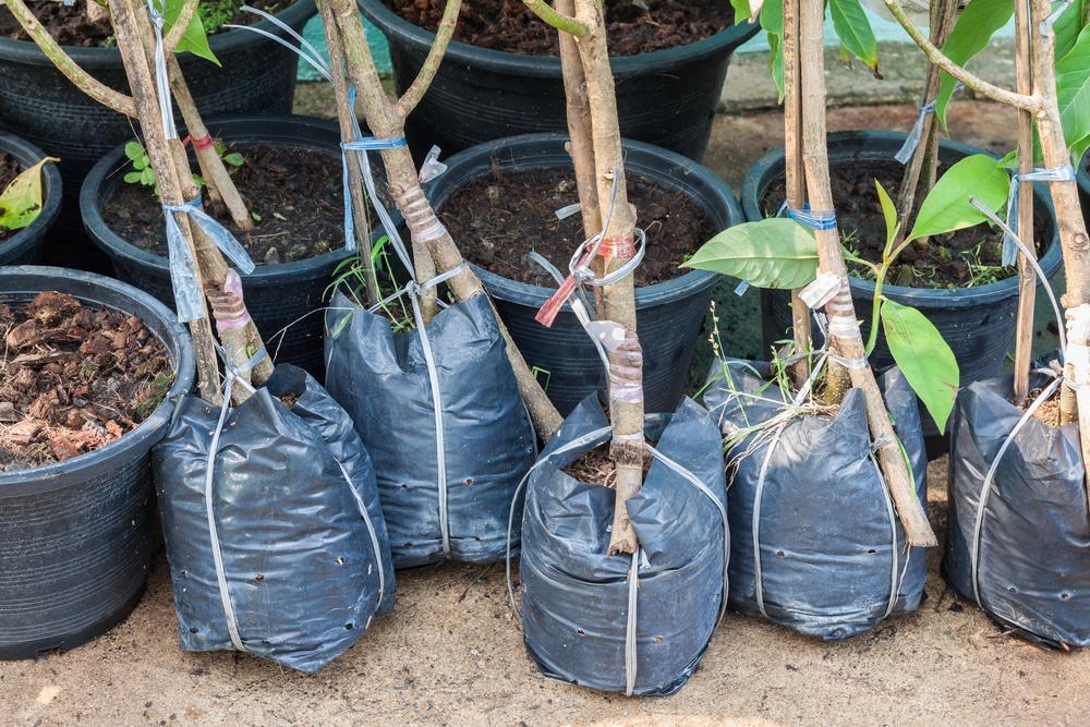 Надежные способы хранения саженцев плодовых деревьев на протяжении всей зимы до посадки