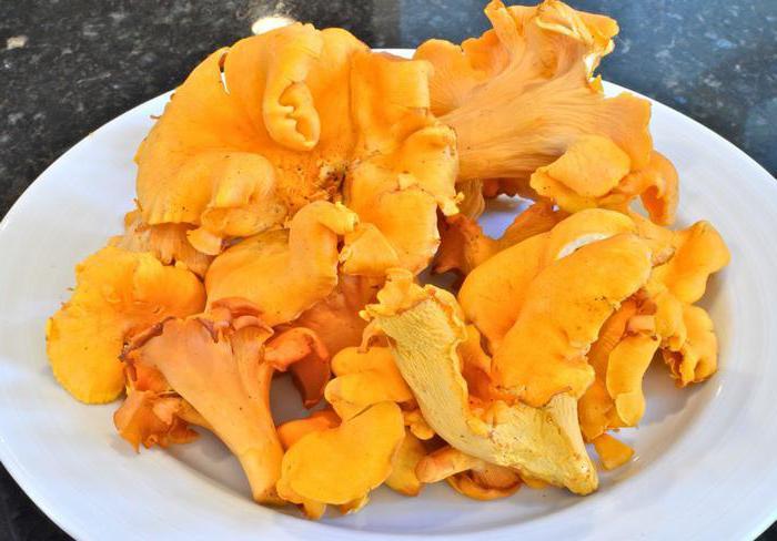 Как правильно хранить грибы лисички зимой и сроки годности продукта