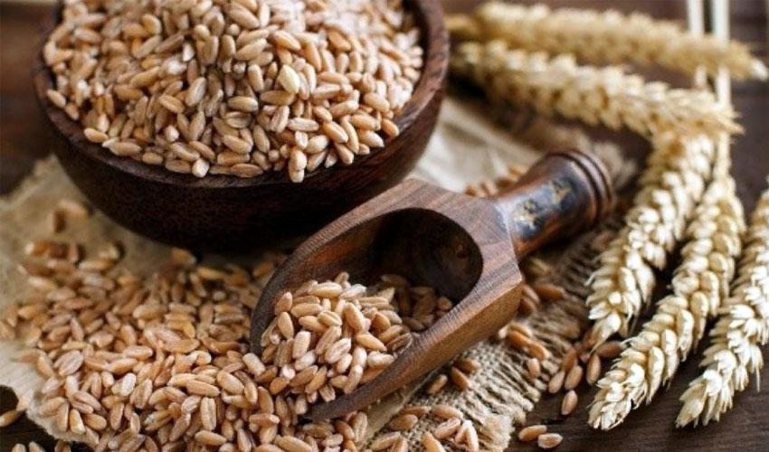 Особенности хранения пшеницы дома: возможные методы и правила их использования