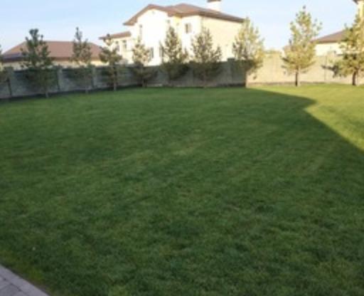 Как выбрать теневой газон