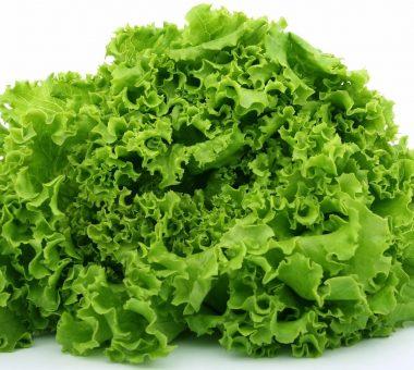 Можно ли замораживать салатные листья